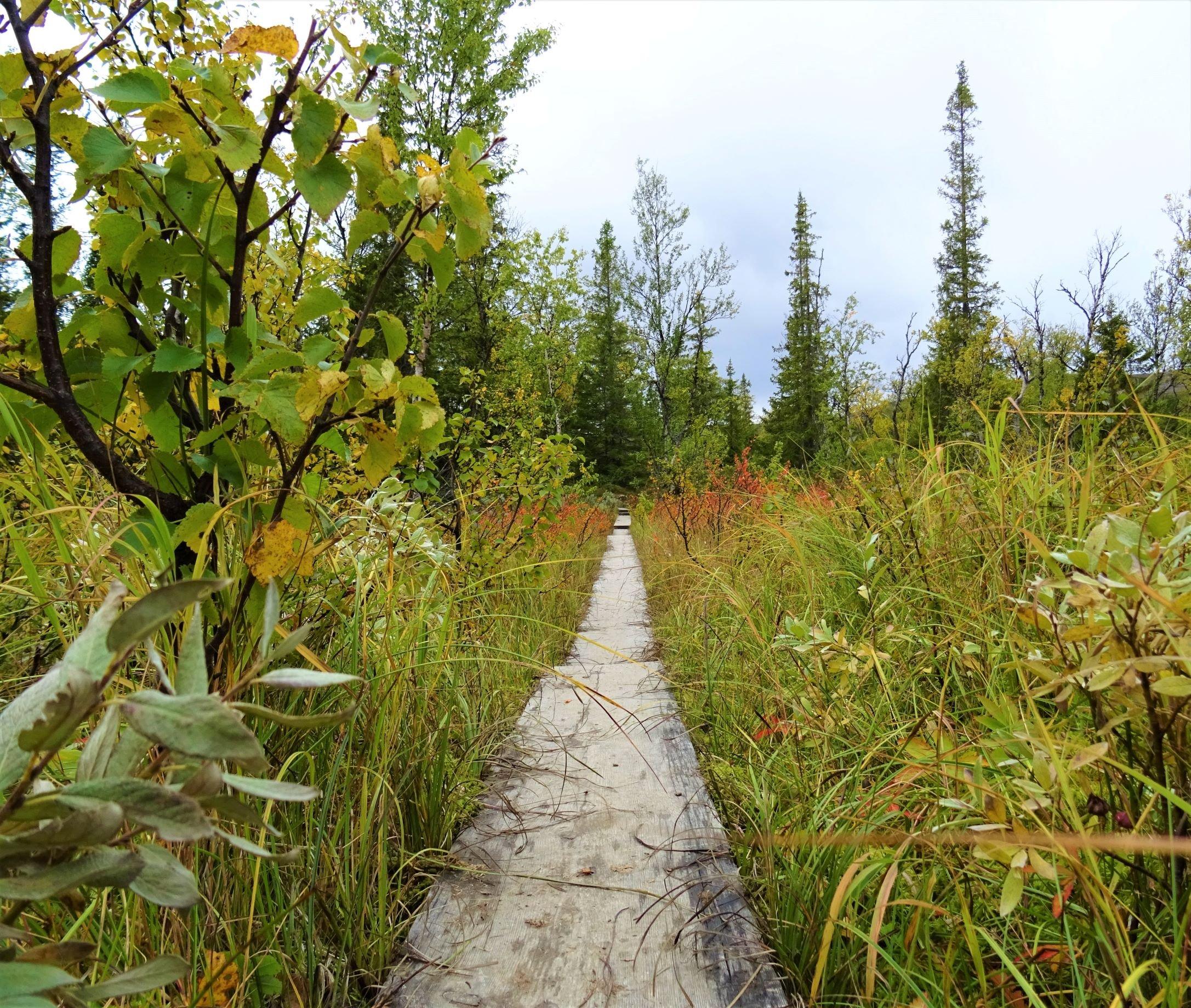 Planken führen über moorige Wiesen