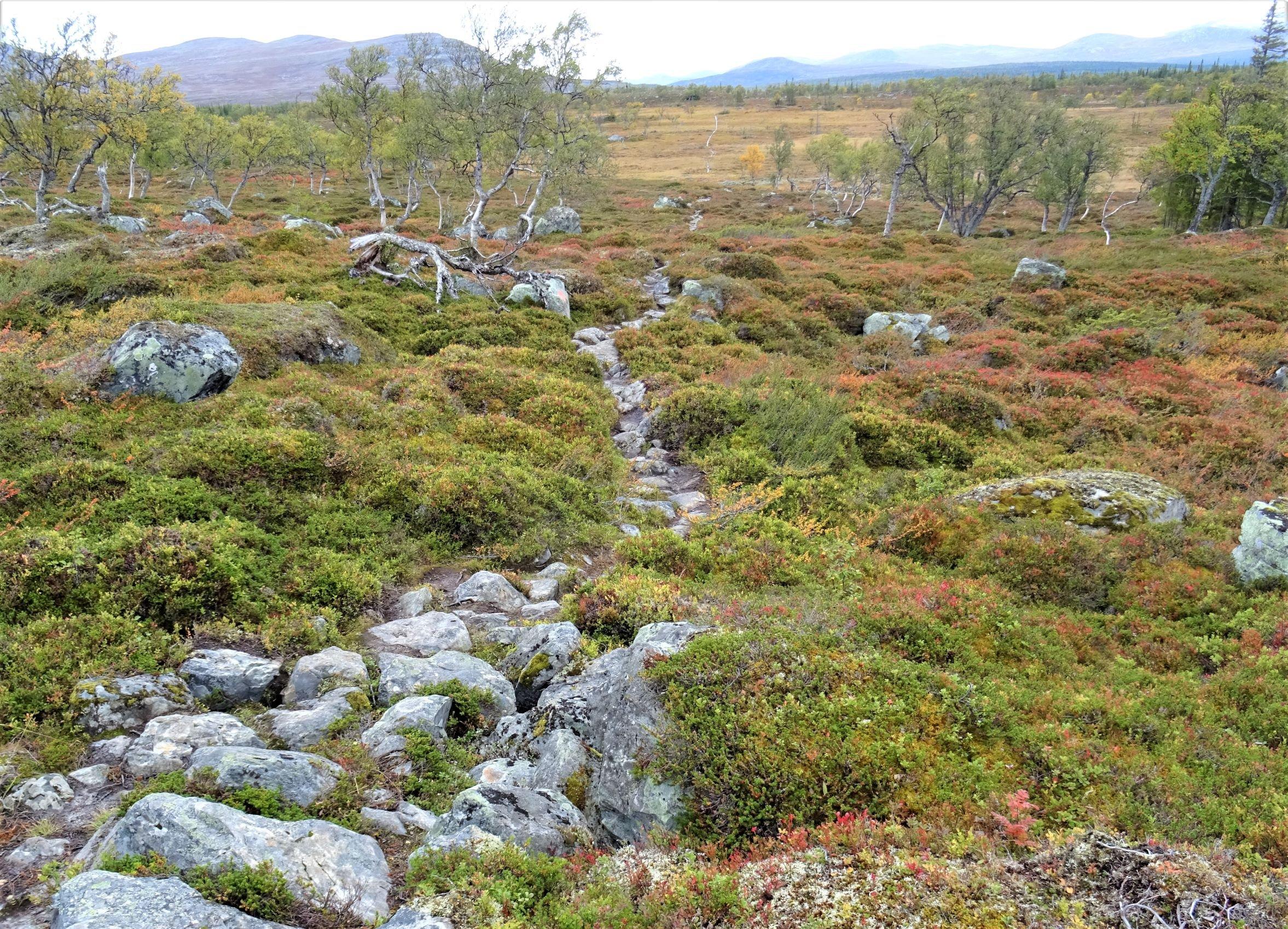 Typischer Wanderweg im Fjäll mit großen Felsbrocken