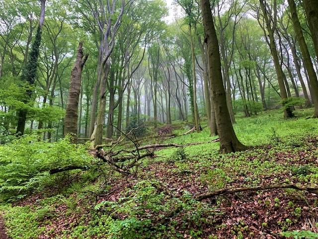 Naturbelassene Strecke im Siebengebirge