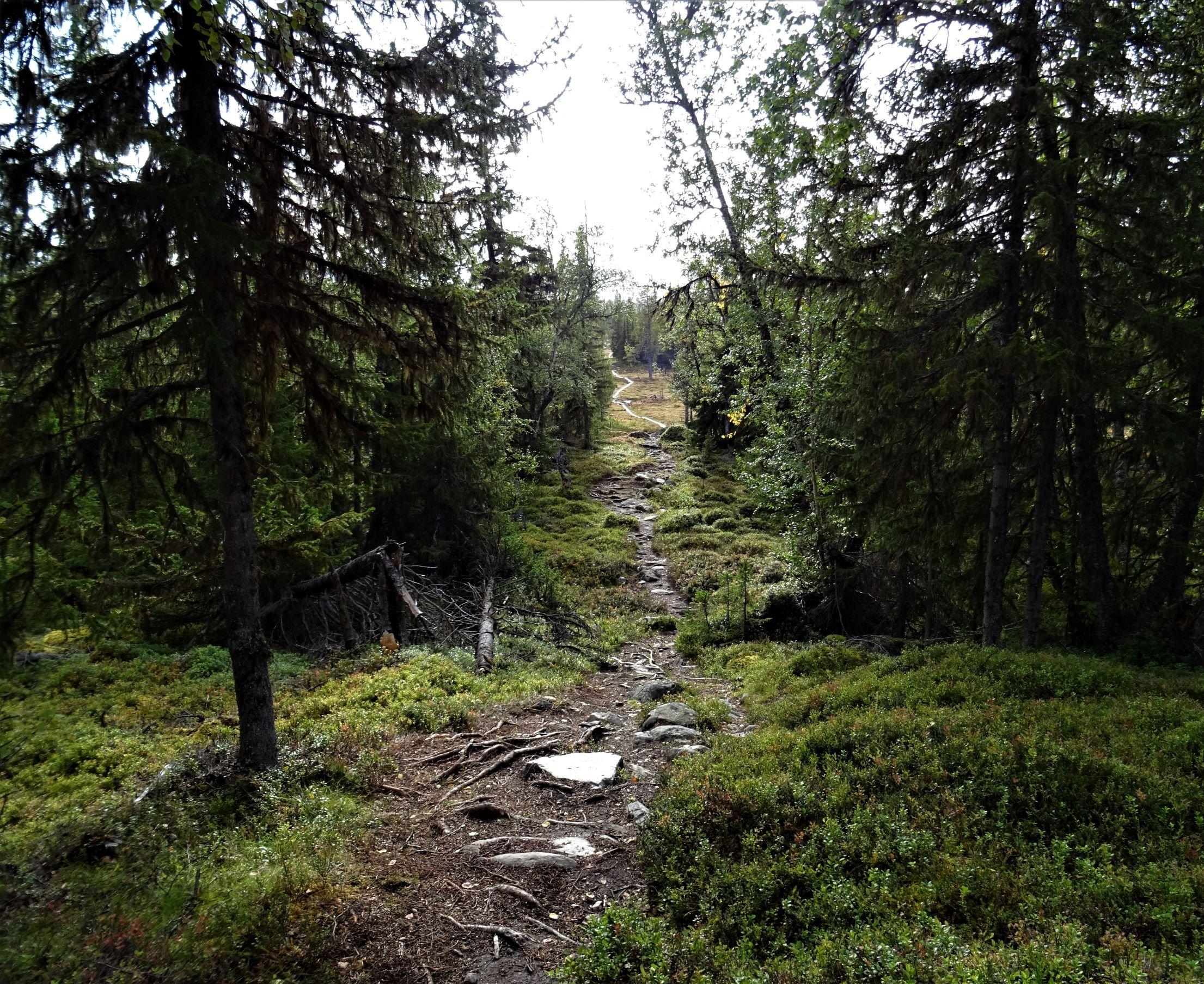 Waldweg bis zum Horizont