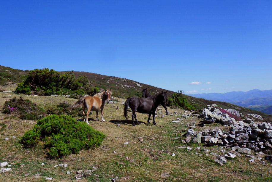 Freilaufende Pferde in den Bergen
